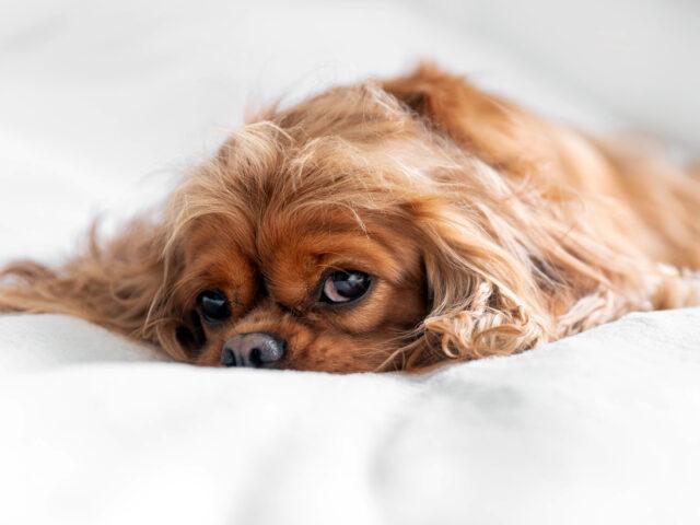 Urlaubskrankheiten beim Hund