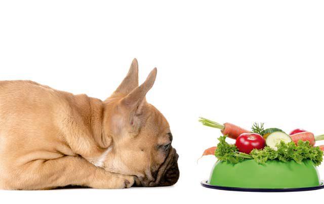 Hunde vegan ernähren?