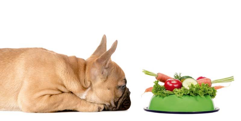 ein Hund liegt vor einem Fressnapf voll mit Gemüse