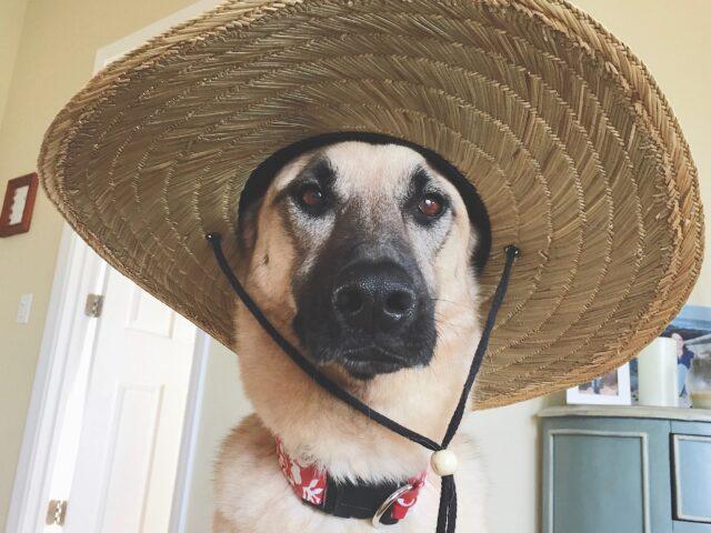 Sommertipps für den Hund