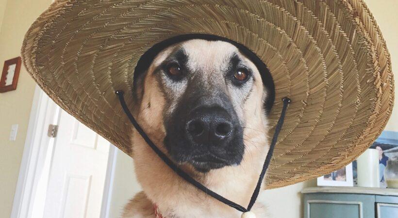 dog-wearing-a-straw-hat-XTQM9ZL